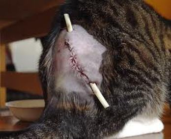 Bite Wounds Amp Lacerations Emergency Pet Information